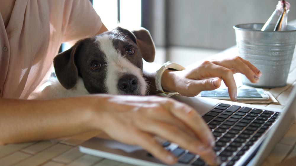 Dicas de como ter um home office muito mais produtivo?